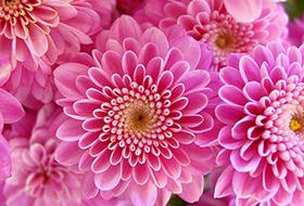 Mini virágú cserepesek